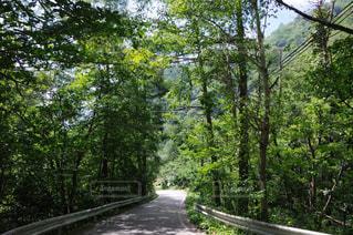 山道の写真・画像素材[781683]