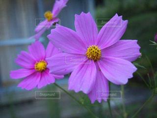 近くの花のアップ - No.781497