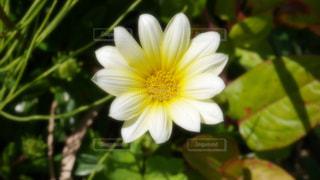 緑の葉と黄色の花 - No.782089