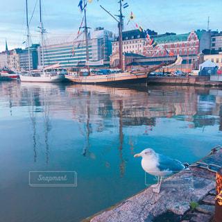 フィンランドのかもめの写真・画像素材[795635]