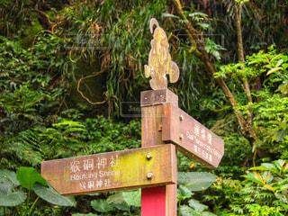 猴硐神社への道しるべの写真・画像素材[802839]
