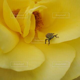 黄色い花と昆虫の写真・画像素材[2114126]