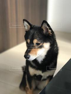 犬の写真・画像素材[296022]