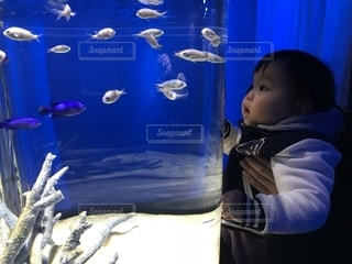 初めての水族館の写真・画像素材[1214816]