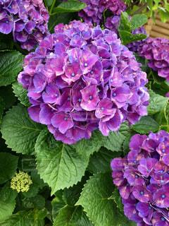 近くの花のアップ - No.782617