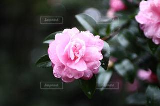 近くの花のアップ - No.783161
