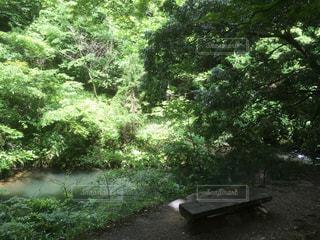 ツリーの横にある空の公園ベンチの写真・画像素材[783090]