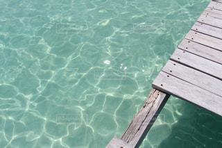 水面下を泳ぐ魚たち - No.783242