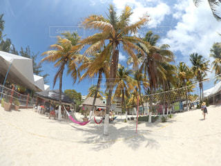 ヤシの木とビーチの人々 のグループ - No.783250