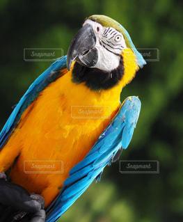 カラフルな鳥が枝に腰掛けの写真・画像素材[783299]