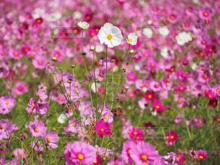 近くの花のアップの写真・画像素材[783300]