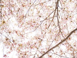 近くの木のアップの写真・画像素材[957507]