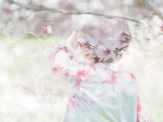桜の木と男と子の写真・画像素材[957510]