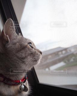 窓の前に座っている猫の写真・画像素材[988157]