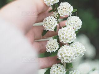 近くの花のアップの写真・画像素材[1044034]