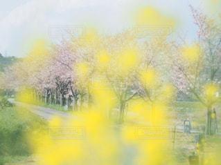 黄色の花の束の写真・画像素材[1044036]
