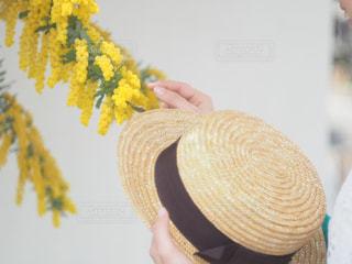 カンカン帽とミモザ - No.1129450