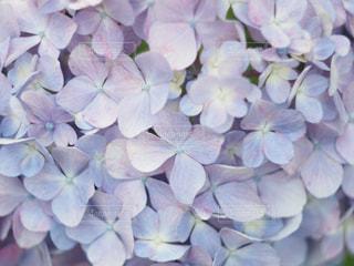 近くの花のアップの写真・画像素材[1292283]