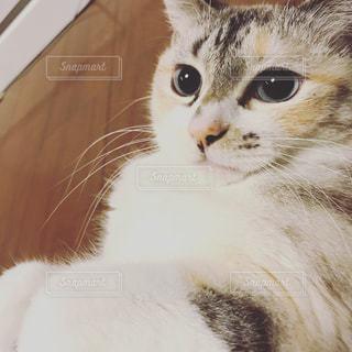 猫のアップの写真・画像素材[783519]