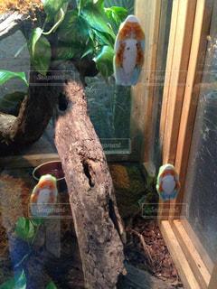 カエルの写真・画像素材[805419]