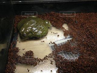 ナイフでチョコレート ケーキの写真・画像素材[823959]