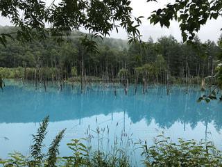 青い池の写真・画像素材[784179]