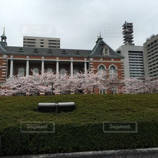 東京駅と桜の写真・画像素材[841341]