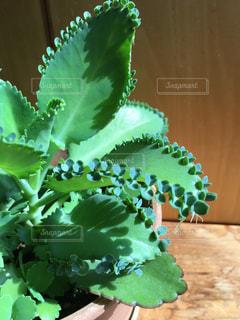 観葉植物の写真・画像素材[841345]
