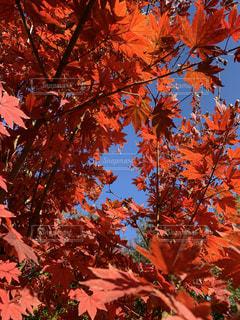 秋空の写真・画像素材[3421523]