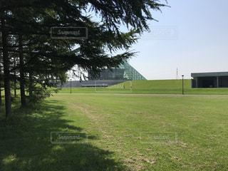 背景の木と大規模なグリーン フィールドの写真・画像素材[1023278]