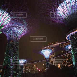 夜空の光る木の写真・画像素材[2361763]