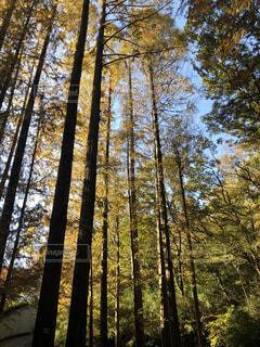 森の真ん中にある木の写真・画像素材[2777139]
