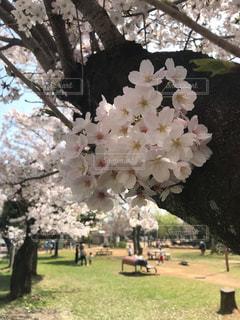 木に花の花瓶の写真・画像素材[3025609]