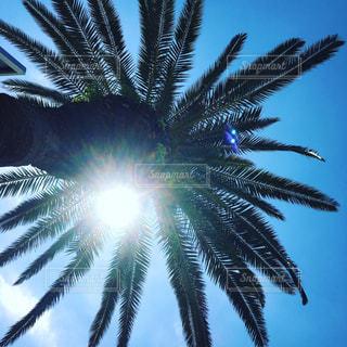 ヤシの木の写真・画像素材[1077382]