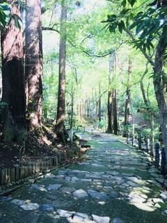 森林の写真・画像素材[831977]