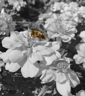 一部だけカラーシリーズ③ 蜂の写真・画像素材[886626]