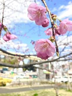 梅の花の写真・画像素材[1068065]