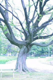 木の隣に立っているキリン - No.843269