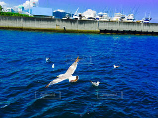 海の上を飛んでいる鳥 かもめの写真・画像素材[786118]