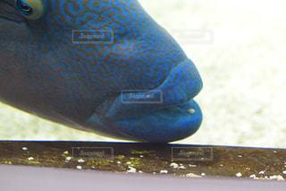 魚の写真・画像素材[785613]