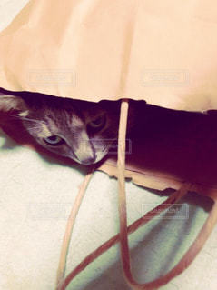 袋の中に入っている猫の写真・画像素材[786979]