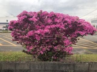 道の端にピンクの花の写真・画像素材[1142668]