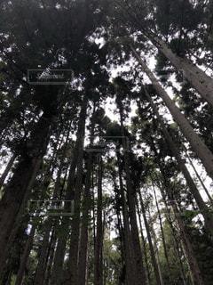 フォレスト内のツリー - No.791108