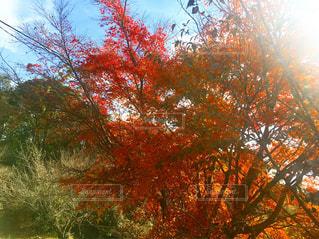 近くの木のアップの写真・画像素材[786148]