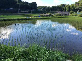 芝生に囲まれた池の写真・画像素材[786206]