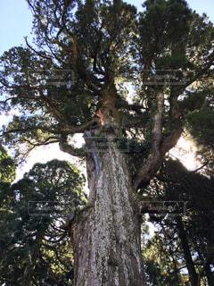 大きな木の写真・画像素材[786208]