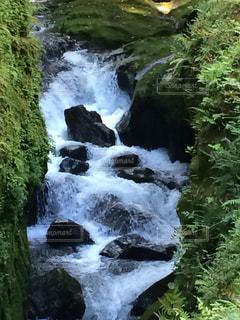 木々 に囲まれた滝の写真・画像素材[786244]
