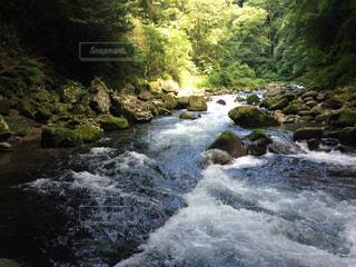 川の側の木と滝の写真・画像素材[786245]