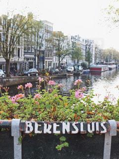 可愛いアムステルダムの写真・画像素材[854771]