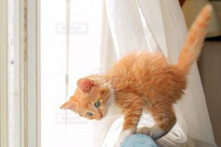 窓際の猫 - No.787228